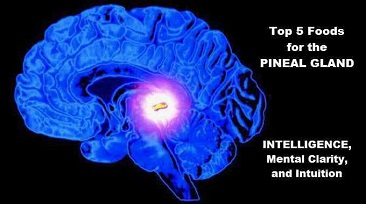 pineal glad best foods